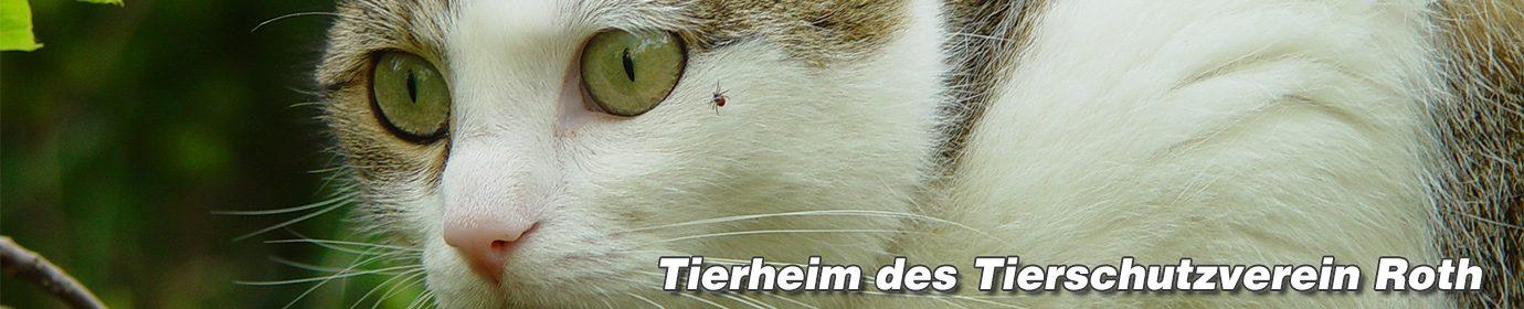 Tierheim Roth des Tierschutzvereins Roth